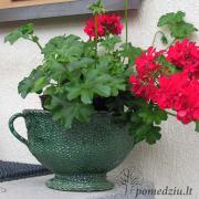 Gėlės keramikiniame vazone puikiai pagyvins jūsų terasą arba aikštelę prie įėjimo.