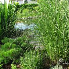Šalia vandens tinka sodinti miskantus (viksvas). Jos labai dekoratyvios, todėl dažnai puošia alpinariumus ar gėlynus. Tačiau jų priežiūra reikalauja nemažai darbo – augalas greitai plečiasi, o jį retinti sunku. Tad reikėtų rinktis, kam suteiksite pirmenybę – augalo grožiui ar lengvai priežiūrai.